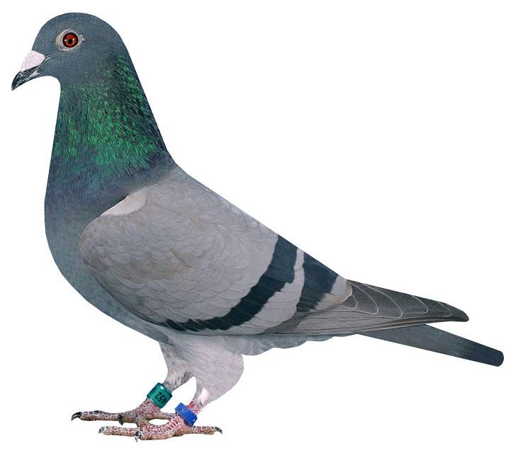 452 // Tochter 1. As-Vogel