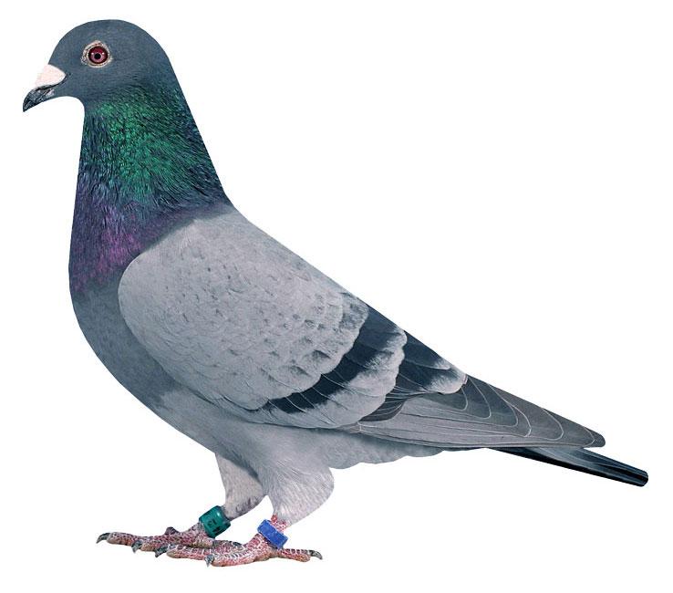454 // Sohn 2. As-Vogel